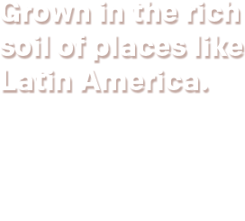 Grown in the rich soil of places like Latin America.