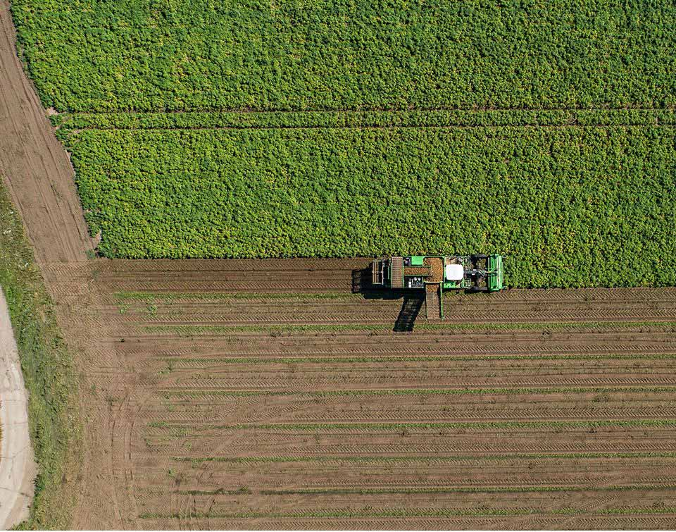 Birds eye view of a tractor harvesting potatoes